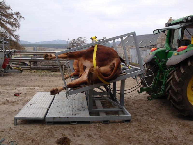 Cattle Handling Equipment By Livestockequipment Co Uk